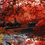 紅の吊橋 紅葉