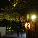 三渓園 夜桜