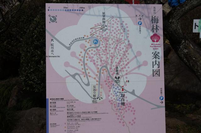 筑波山梅林案内図