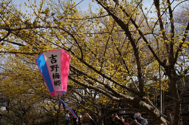 吉野梅郷梅の公園入り口