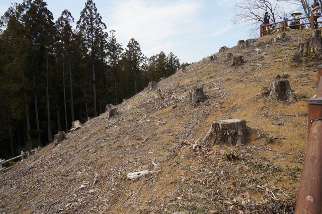 吉野梅郷梅の公園伐採済み