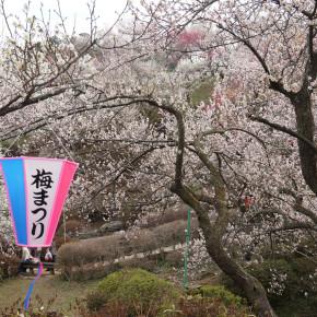 吉野梅郷梅の公園梅まつり